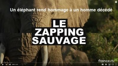 Des éléphants rendent hommage à un homme